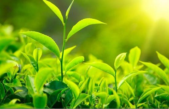 植物与环境